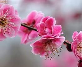 Весна, весна…..